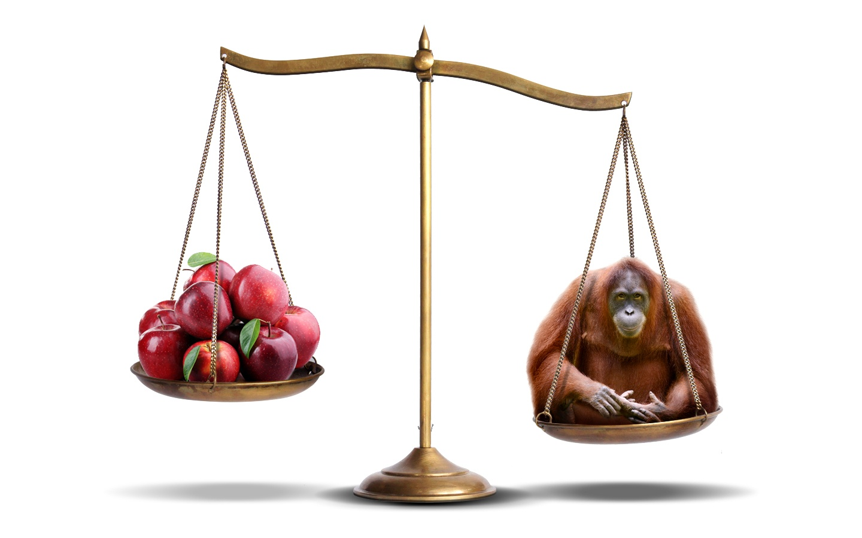 OrangutanApples